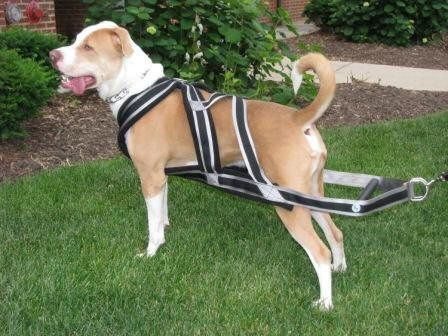 Weight Pulling Harnesses Including Other Dog Products With Images