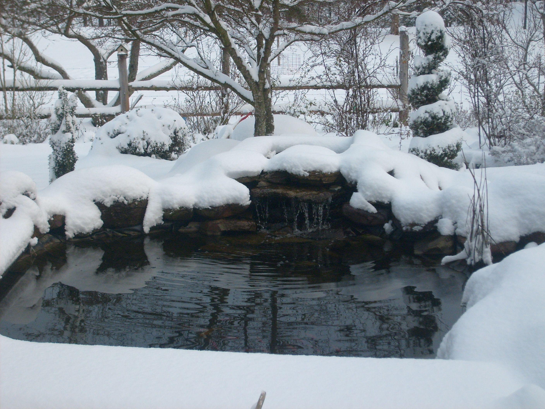 Snow On The Koi Pond Koi Pond Koi Water Garden