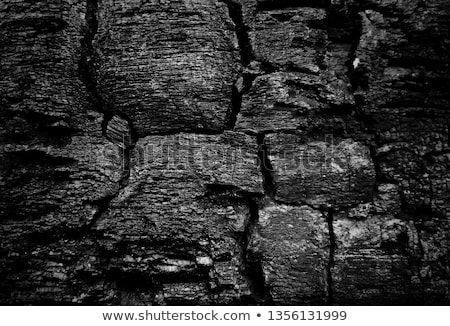 Black Burned Wood Texture Background. #woodtexturebackground Black Burned Wood Texture Background. #woodtexturebackground Black Burned Wood Texture Background. #woodtexturebackground Black Burned Wood Texture Background. #woodtexturebackground Black Burned Wood Texture Background. #woodtexturebackground Black Burned Wood Texture Background. #woodtexturebackground Black Burned Wood Texture Background. #woodtexturebackground Black Burned Wood Texture Background. #woodtexturebackground
