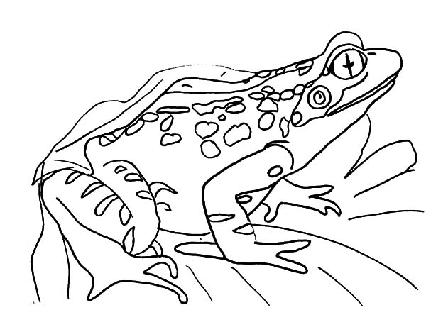 Bullfrog Sitting On A Leaf Coloring Pages Best Place To Color Di 2020