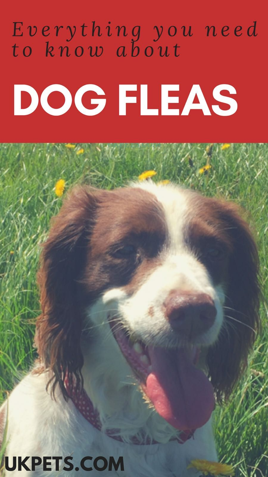 Dog Fleas 6 Pressing Questions Answered Dog Care Aggressive