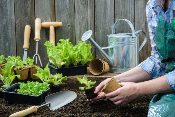 12 Water Savings Tips For Gardening