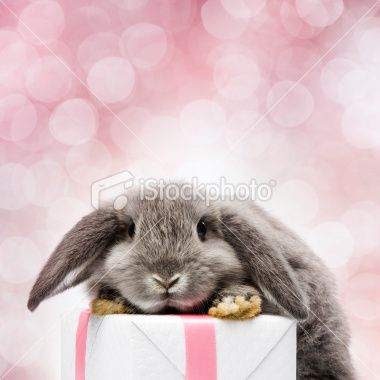 Easter Bunny <3