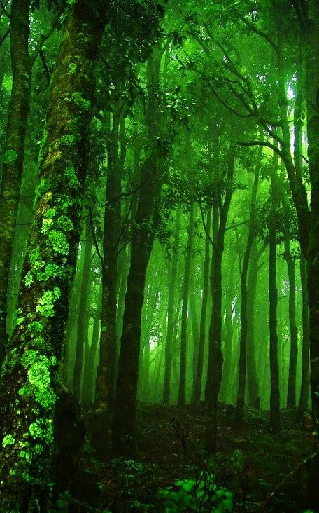 Visions Of Green Green Nature Nature Forest