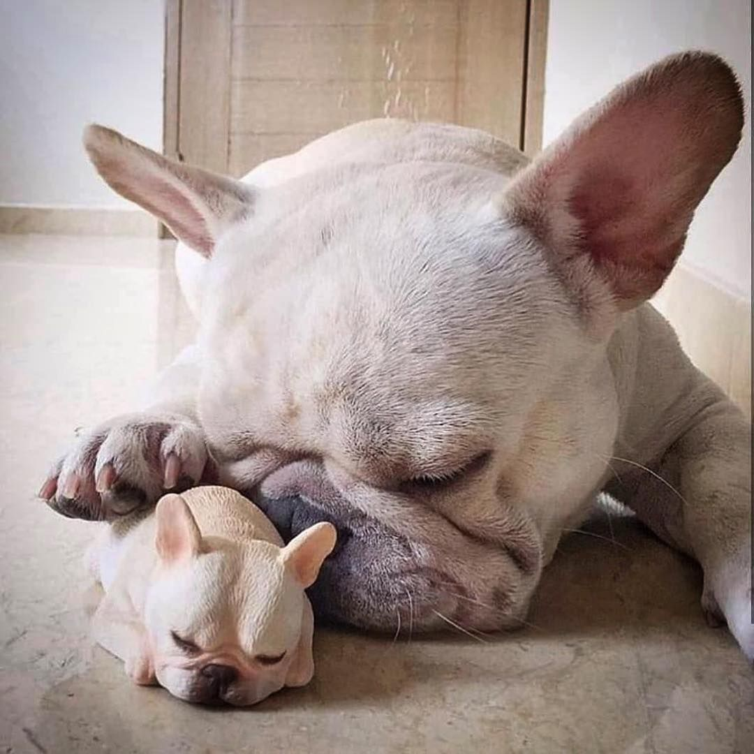 400 Likes, 7 Comments Frenchie Foundation