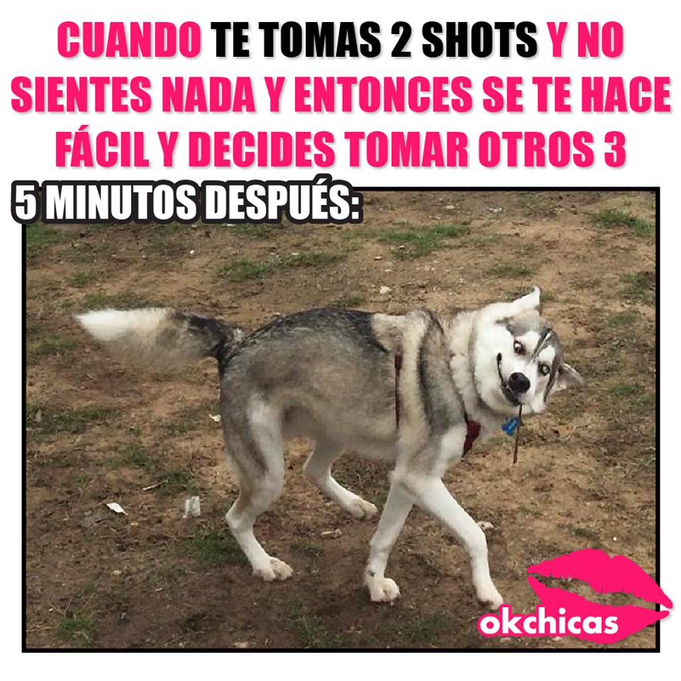 20 Divertidos Memes De Perros Que Te Haran Llorar De Risa Memes Perros Llorando De Risa Memes De Perros Graciosos