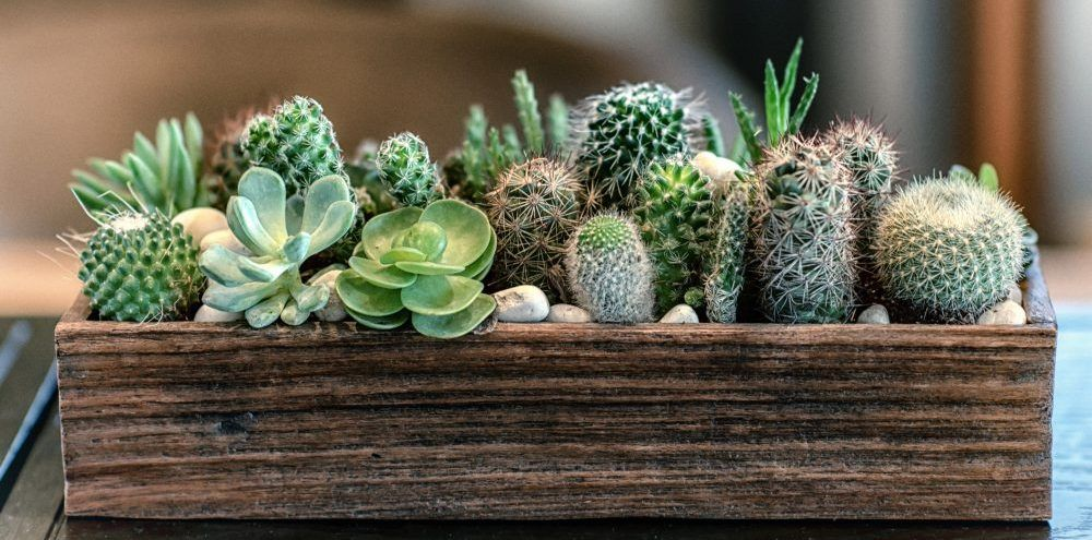 Photo of Indoor plants that need little water – Greener on the Inside