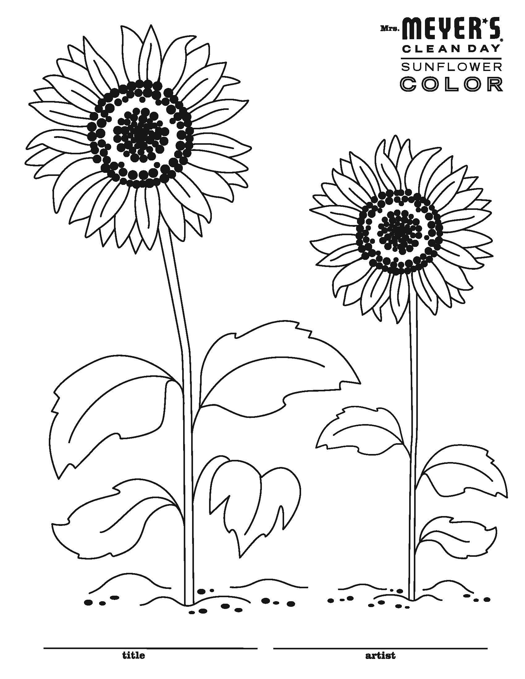 Bold And Bright Sunflowers