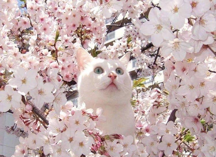 Cat Flowers Cuteness Overload Cats Pets Cute Cat Care Cats