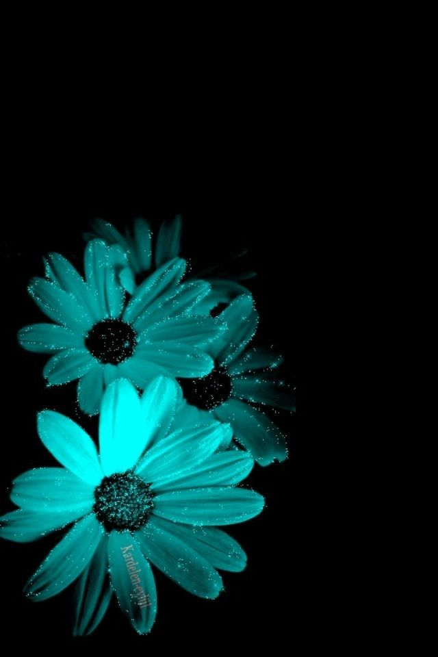 Pin By Gloriamreyes On 01 Aqua Mint Teal Turquoise Colours Color Splash Photography Beautiful Flowers Wallpapers Flower Wallpaper Coolest flower turquoise wallpapers