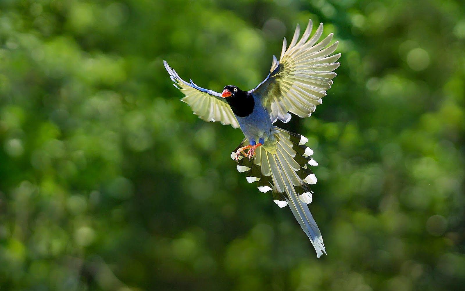 Wallpaper Burung