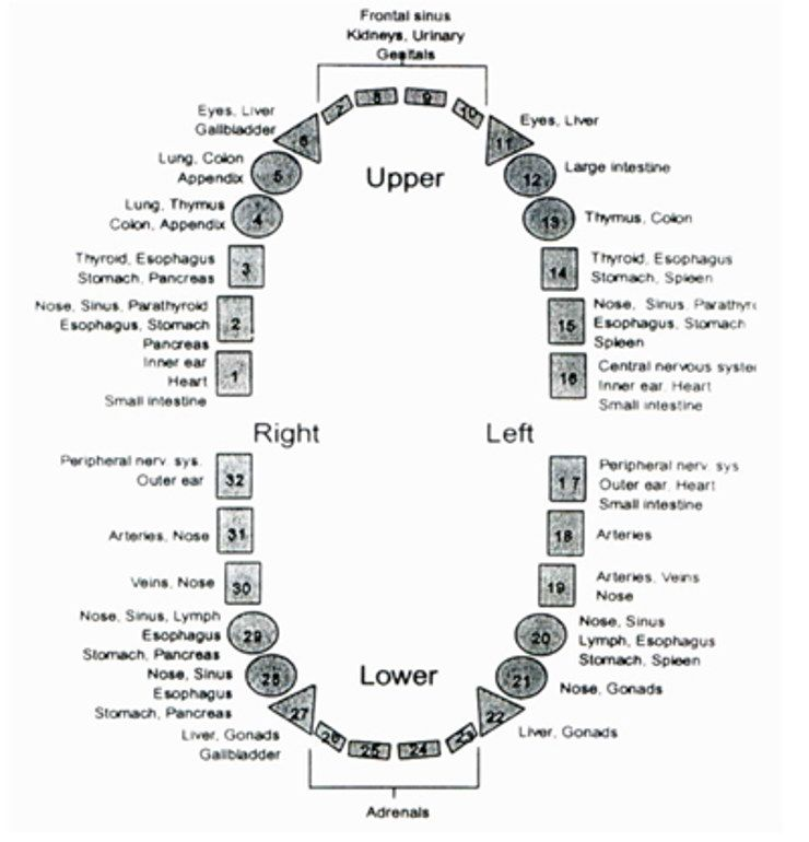 tooth chart Health Back  Body Pinterest Health, Teeth and