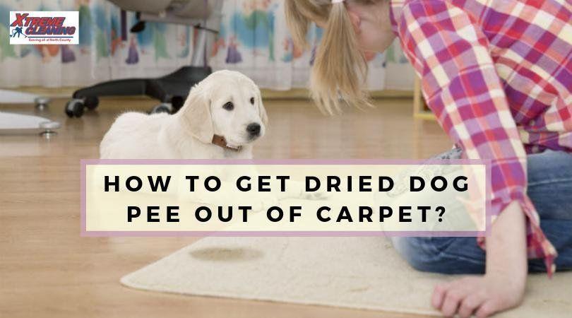 How To Get Dried Dog Pee Out Of Carpet Dog Pee Dog Urine Dog Pee Smell
