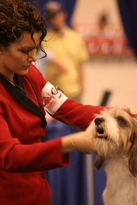 how to train your dog for a dog show