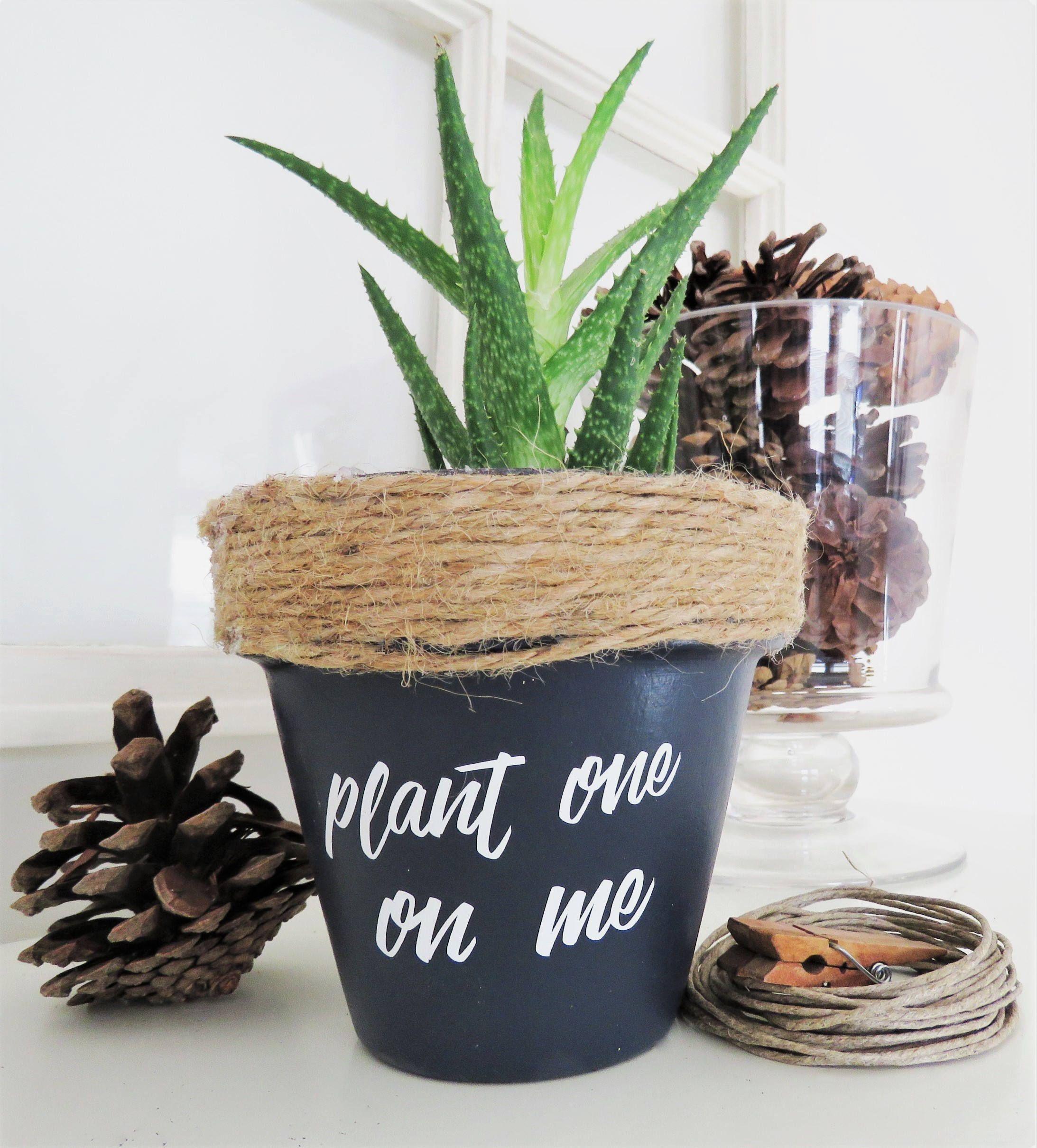 Plant one on me. Plant pun. Funny plant pot. Funny Plant