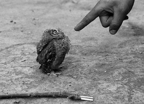 Sit!  Stay!  Good Owl.