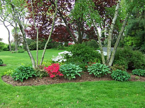 Garden Design and Plant Ideas For Spring - Put Some Color In Your Life