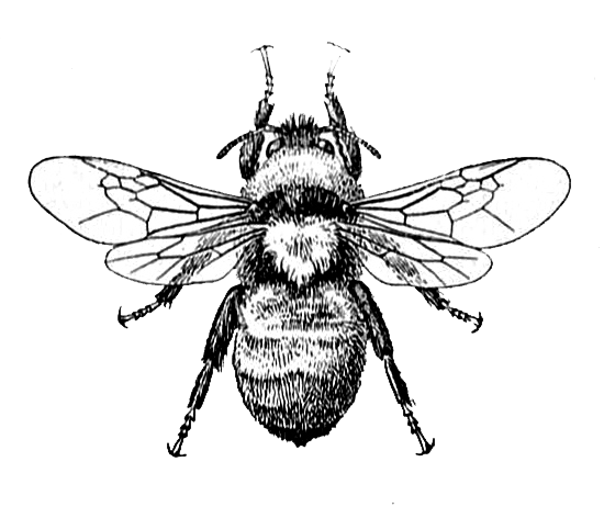 Bee Image and Dictionary Definition | Vintage bee, Graphics and ...