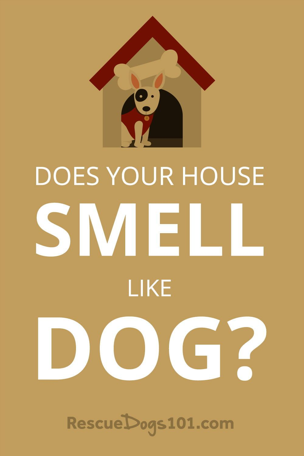 21 Secrets To Keeping My House From Smelling Like Dog Dogs Kids