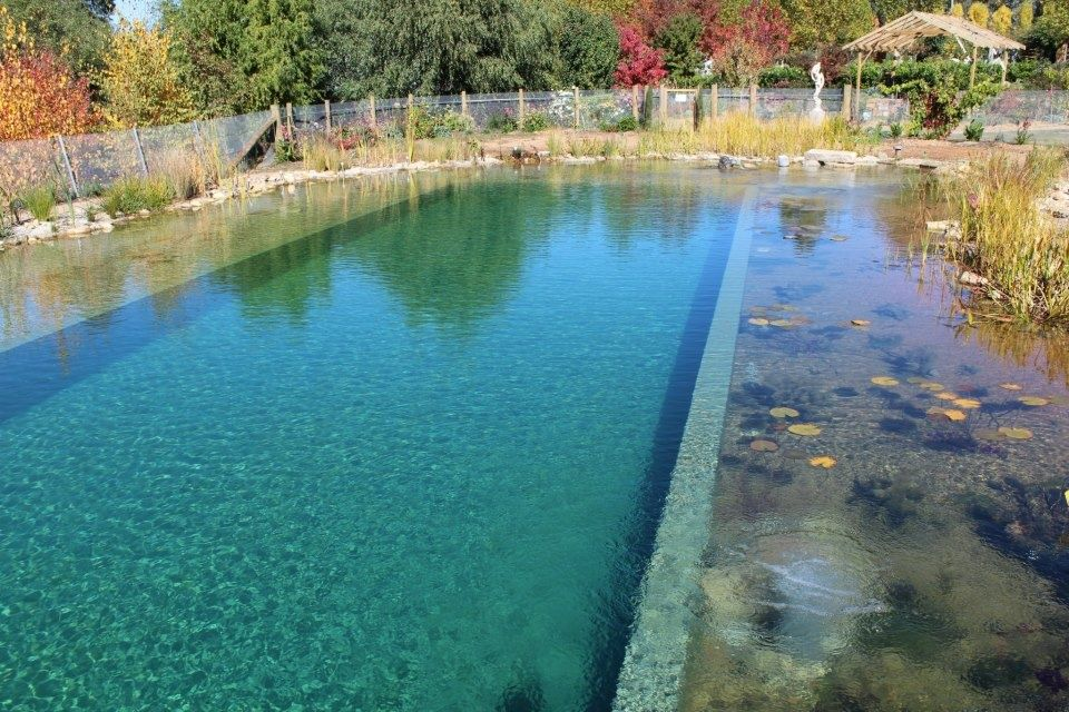Image Result For Natural Olympic Pool Natural Swimming Pools Natural Pool Natural Swimming Ponds