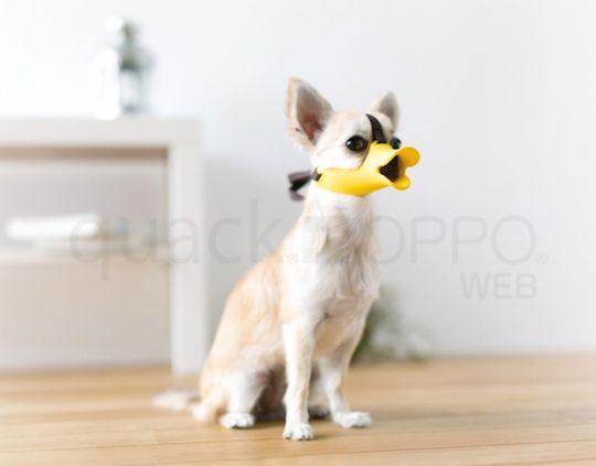 Oppo Dog Muzzle Quack Super Small Dog Muzzle Dogs Small Dog Breeds