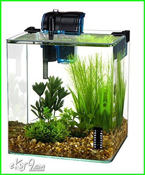 Akuarium Ikan Cupang Aduan Mengganti Air Akuarium Ikan Cupang Cara Mengganti Air Akuarium Ikan Cupang Aquarium Ikan Cup Aquarium Ikan Aquarium Ikan Akuarium