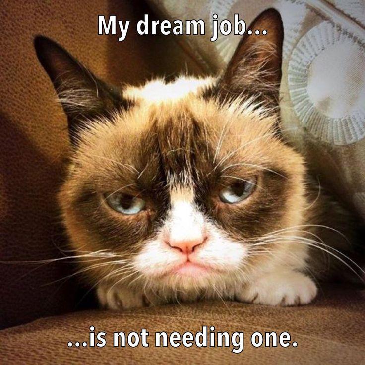 My Dream Job Funny Grumpy Cat Memes Grumpy Cat Humor Grumpy Cat