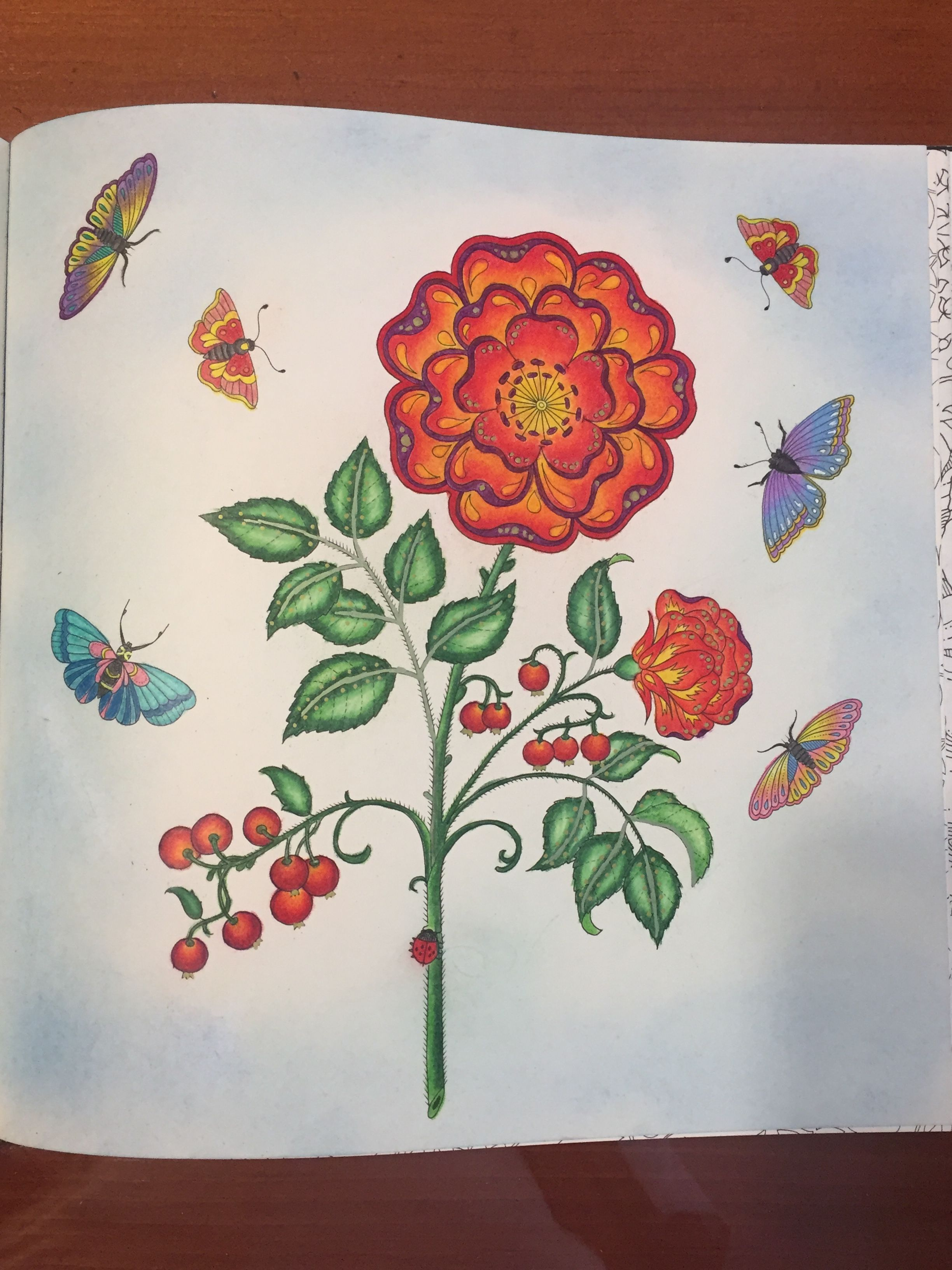 Rose From My Secret Garden Coloring Book I Used Pencils And Pastels Love This