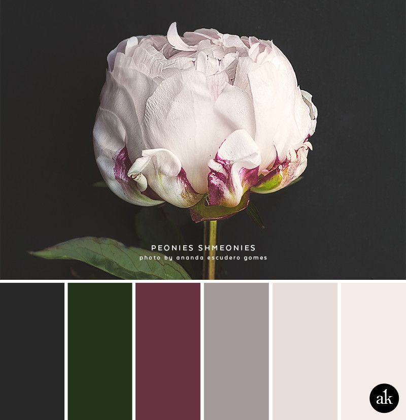 a peony-inspired color palette — Creative brands f