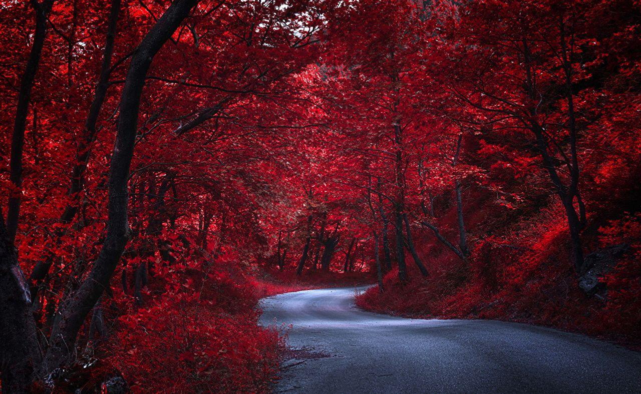 Fotos Rot Natur Herbst Wege Bäume