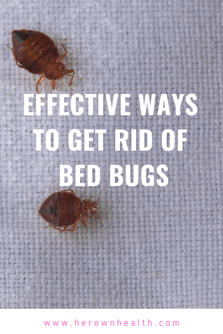 How To Get Rid Of Bed Bugs Bed Bugs Rid Of Bed Bugs Signs Of