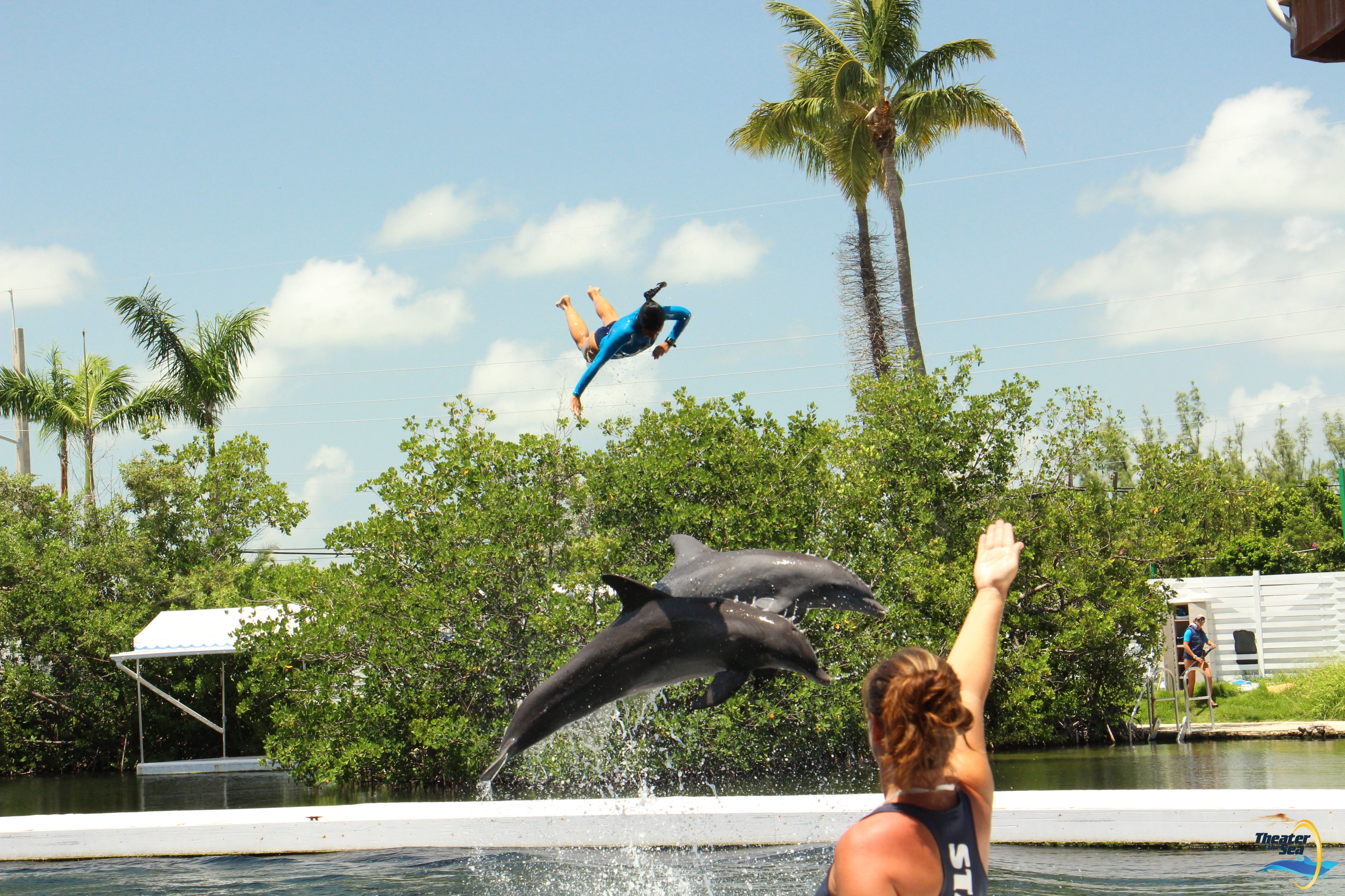 You Can Watch Our Trainers Catch Some Air During The Dolphin Show Dolphins Florida Keys Swimming