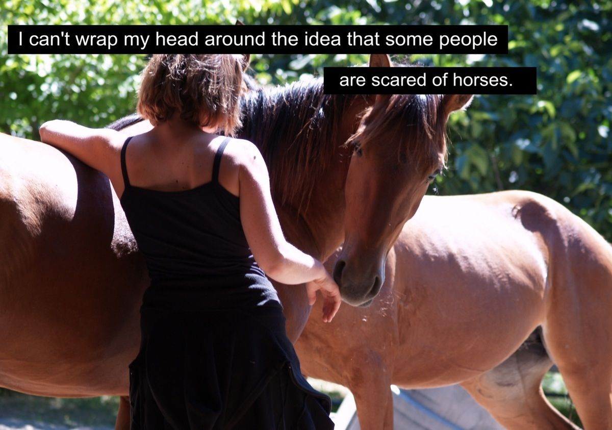 I dont get it like at all funny horses horse riding