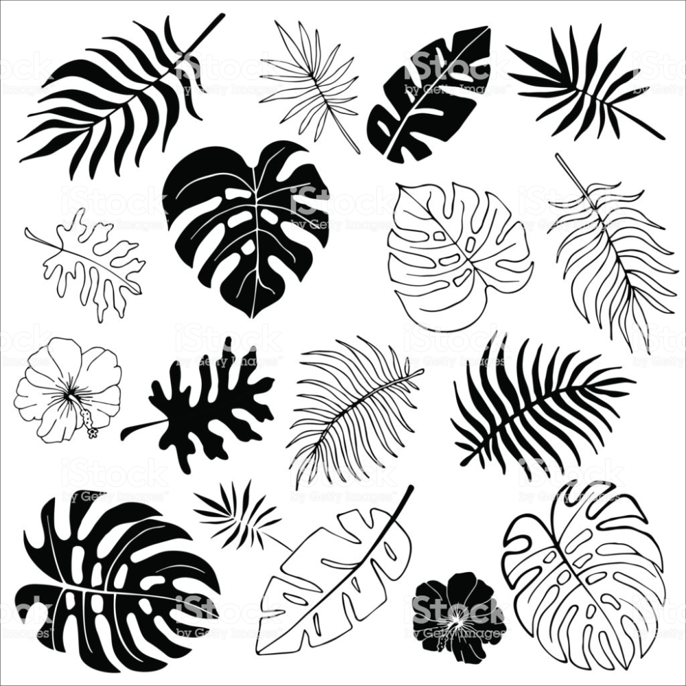 Isolated Silhouettes Of Tropical Palm Leaves Jungle Leaves Royalty Free Leaf Stock Vector Leaf Drawing Flower Drawing How To Draw Hands Vector set of different green tropical palm leaves isolated on white background. leaf stock vector leaf drawing