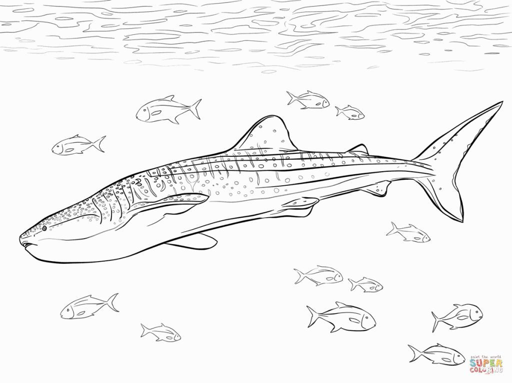 Whale Shark Coloring Pages Shark Coloring Pages Whale Coloring