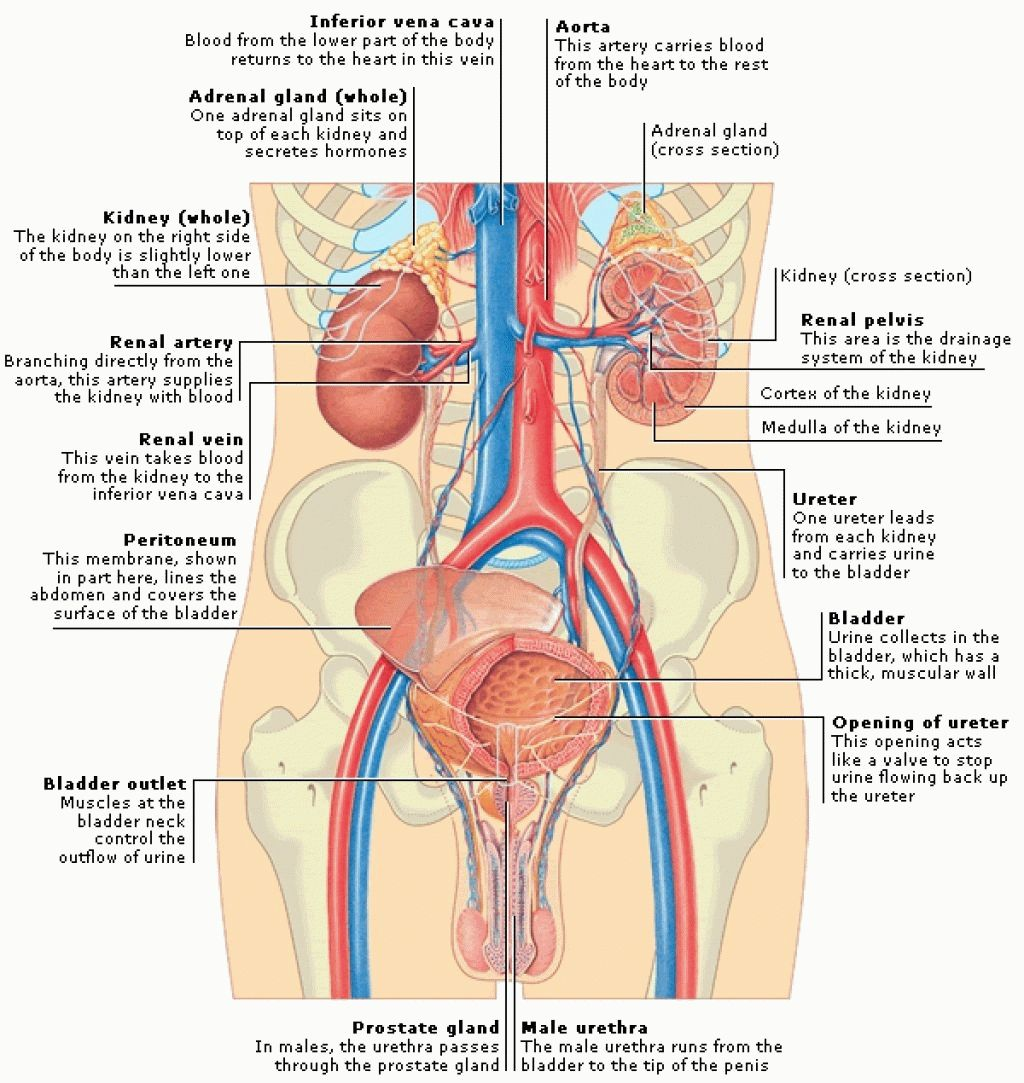 Body Regions Anatomy