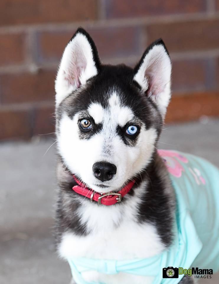 Adopt Cascade Special Needs On Petfinder Snow Dogs Husky Dogs