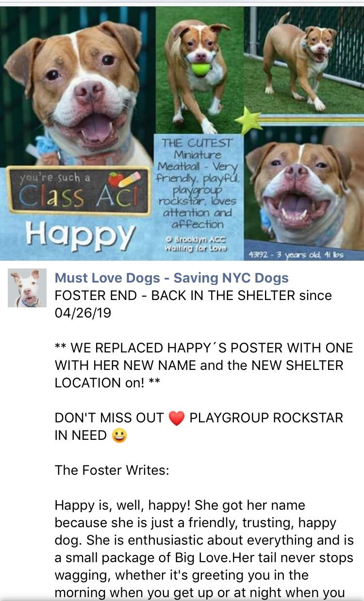 4 26 19 Houdina Renamed Happy Is Back From Foster And Now At The