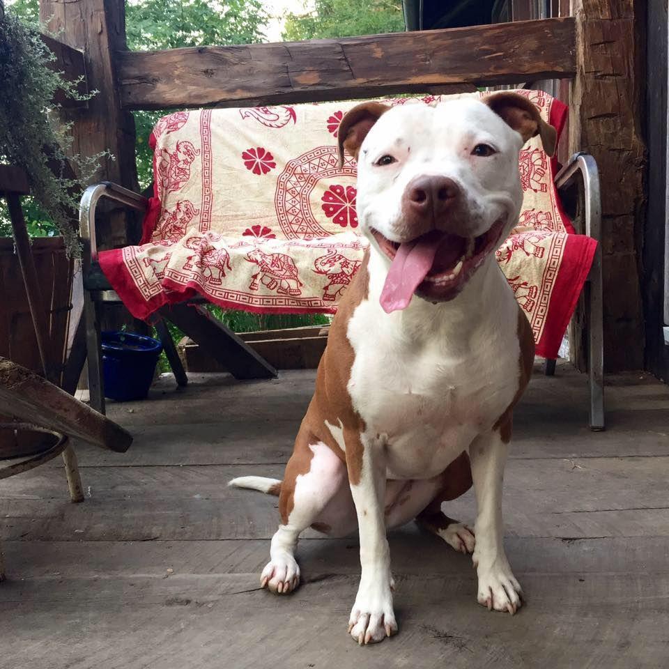 Ruff Election Meet Pawltro, Canine Mayor (Plus