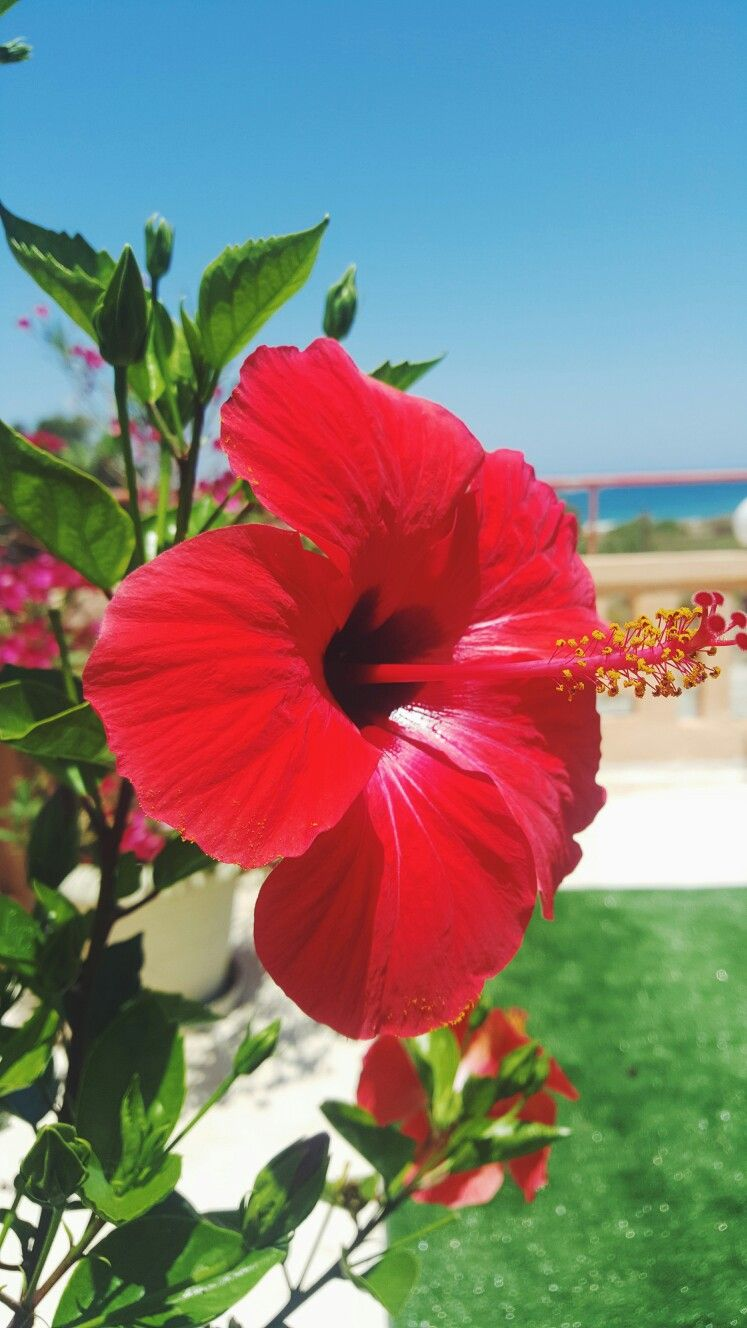 Paris he looks distictively a little smaller than me brother flower in crete island no filter izmirmasajfo Choice Image