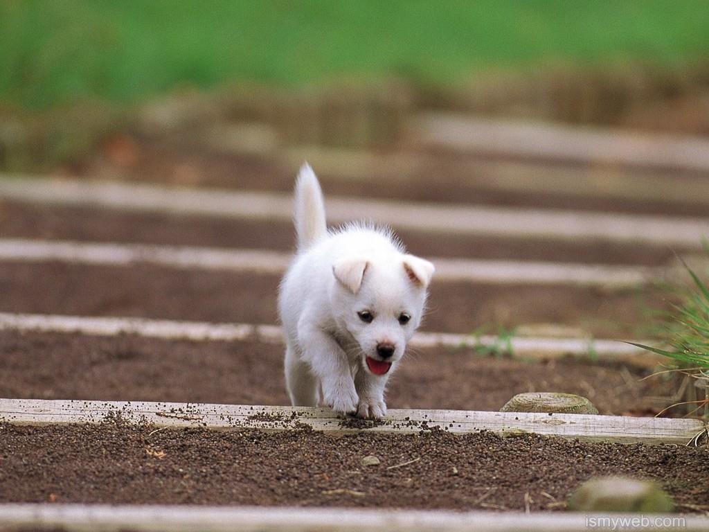 Cute Dogs Hd Wallpaper Download 12 Wallpaper Pinterest Dogs