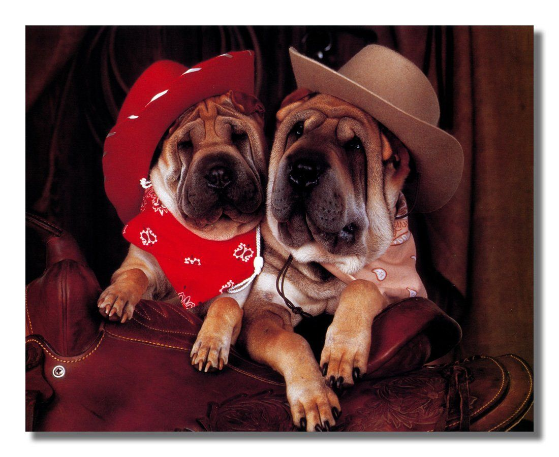 Shar Pei Puppy Dogs Cowboy Hats and Saddle Photo Wall Picture 8x10 ...