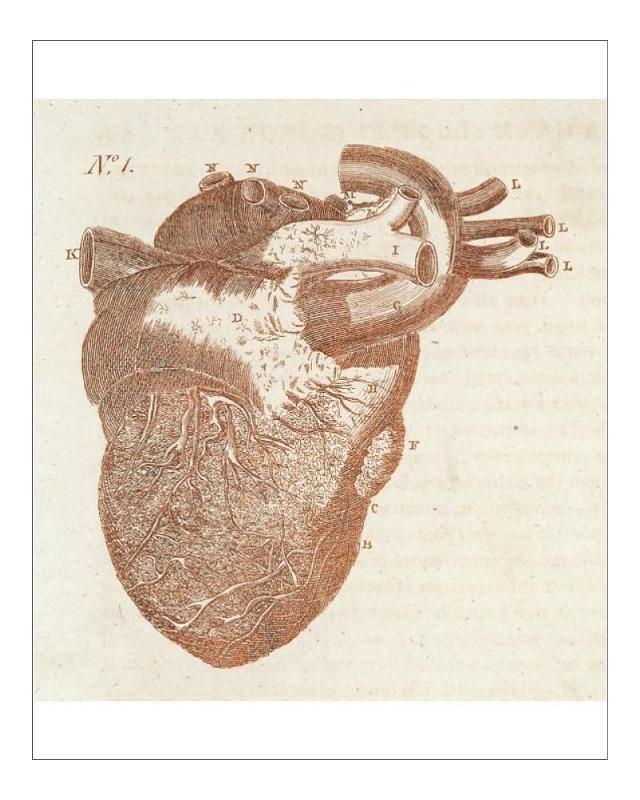 30+ 10 inch Photo. Anatomy/Heart/Sibly