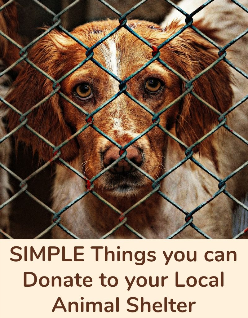 Simple Things You Can Donate To Your Local Animal Shelter Animal Shelter Animal Donations Animals