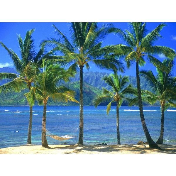 Palm trees on beach free desktop background - free wallpaper image ❤ liked on Polyvore featuring backgrounds, pictures, ocean, palm tree and tropical