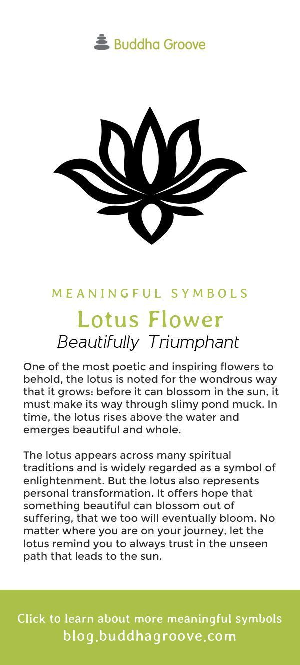 Photo of The Meaning of the Lotus Flower Symbol
