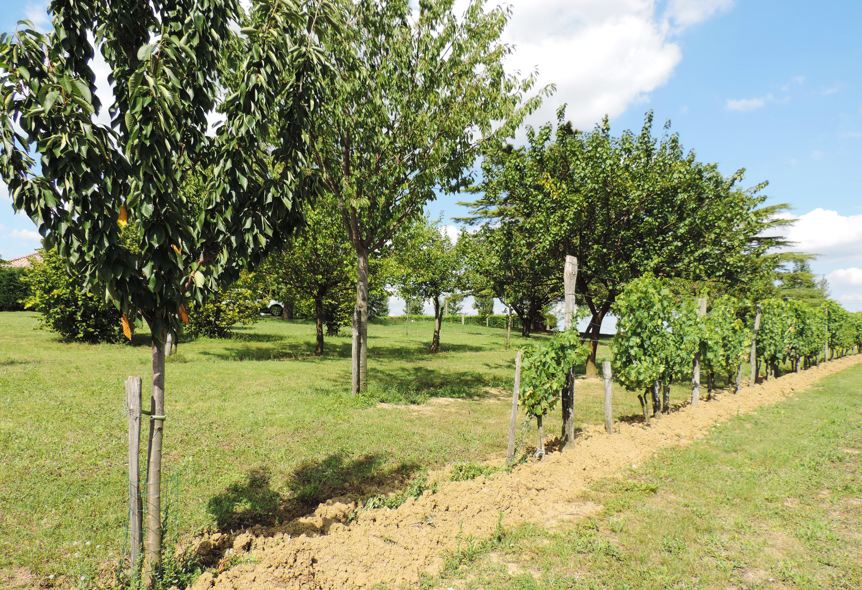 plantation d 39 arbres fruitiers et de 350 ch nes truffiers partir en immobilier agen. Black Bedroom Furniture Sets. Home Design Ideas