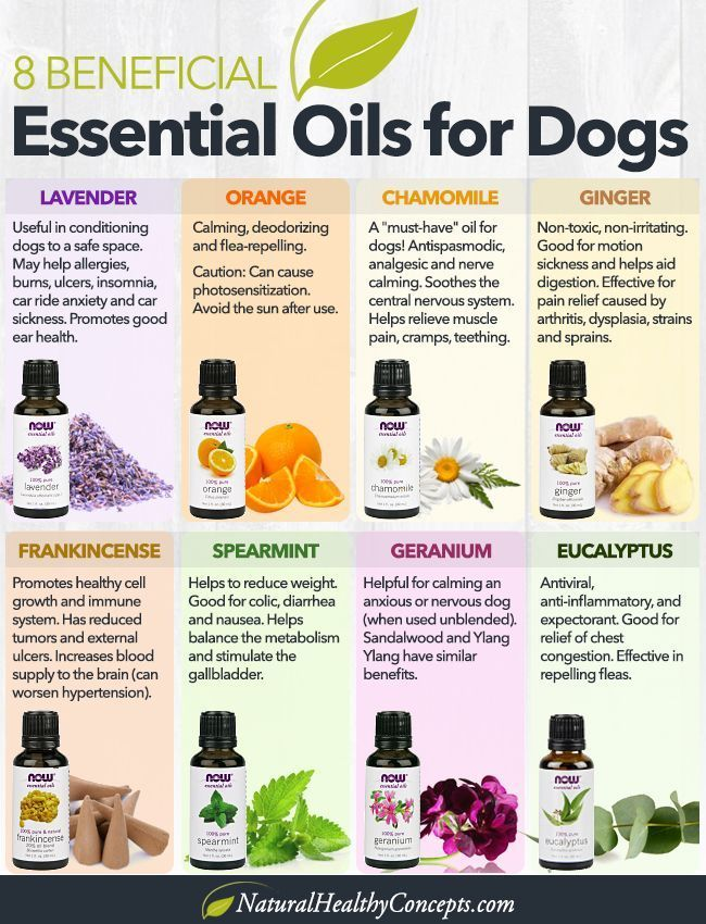 How Essential Oils Can Help You Care for Your Dog - Healthy Concepts with a Nutrition Bias