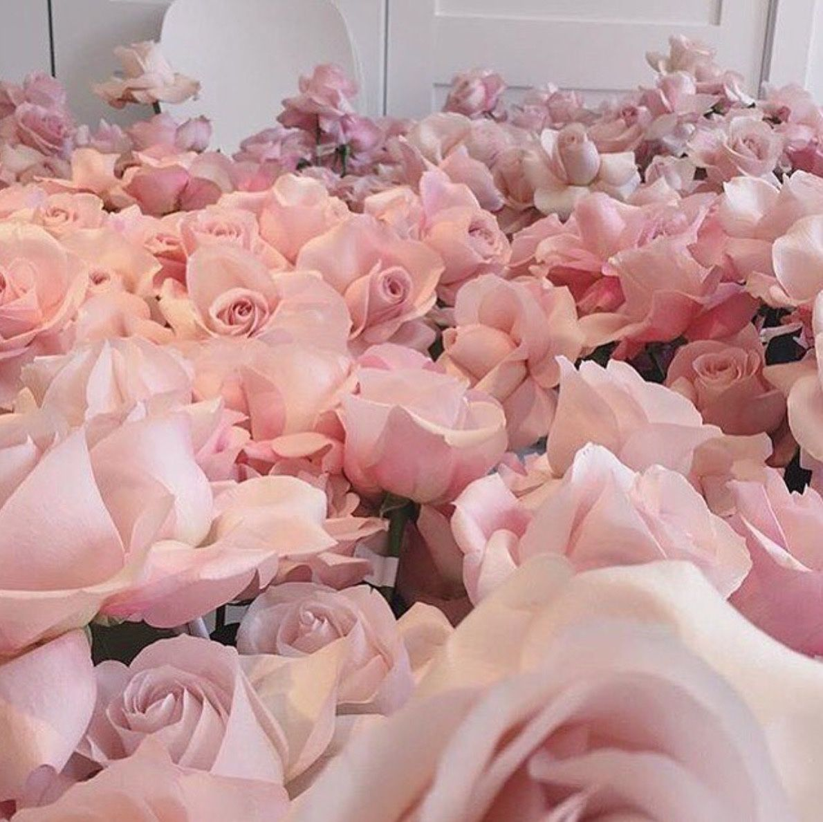 Light Pink Roses Aesthetic