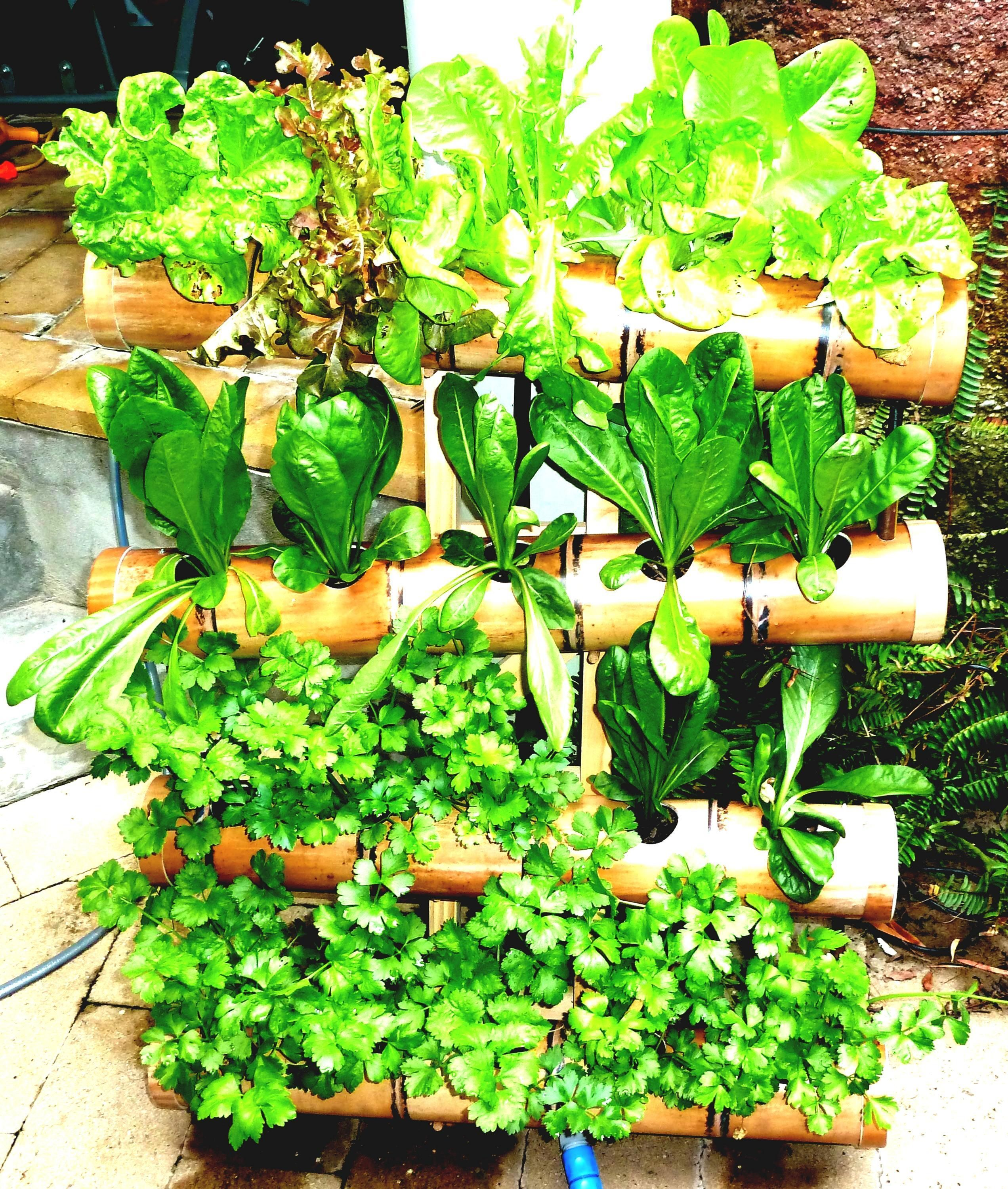 15 Fabulous Vertical Vegetable Garden Ideas For Small Space  15 Fabulous Vertical Vegetable Garden Ideas For Small Space